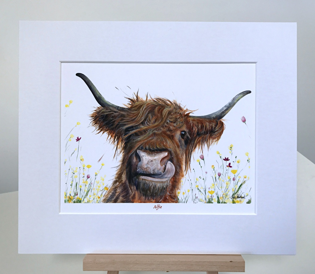 Alfie Highland Cow Pankhurst Gallery