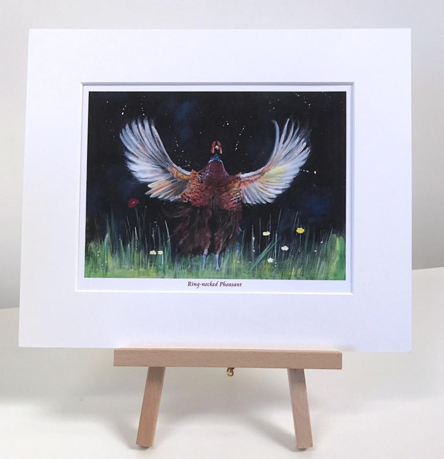 Ring Necked Pheasant Animal Art Pankhurst Gallery